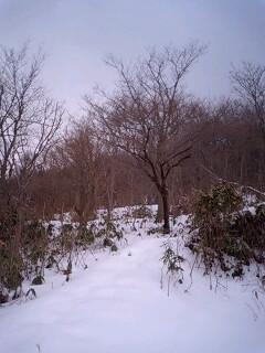 冬枯れの丘.jpg
