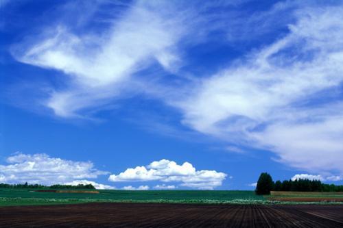 北海道空花畑.jpg