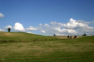 夏の牧場.jpg