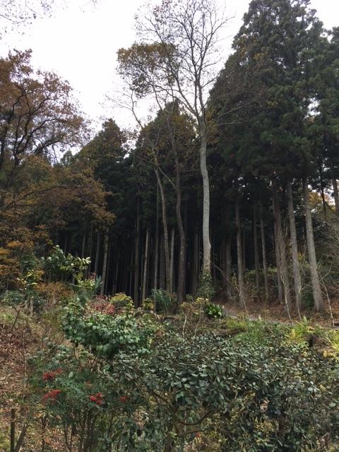 森に入る道.JPG