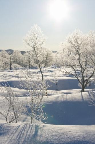 白い丘.jpg