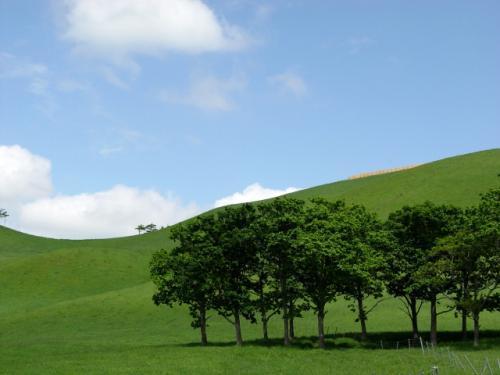 緑の丘.jpg