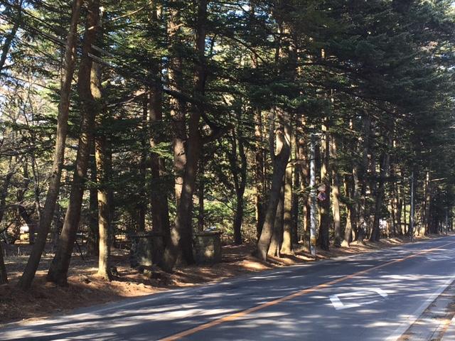 軽井沢の道.JPG
