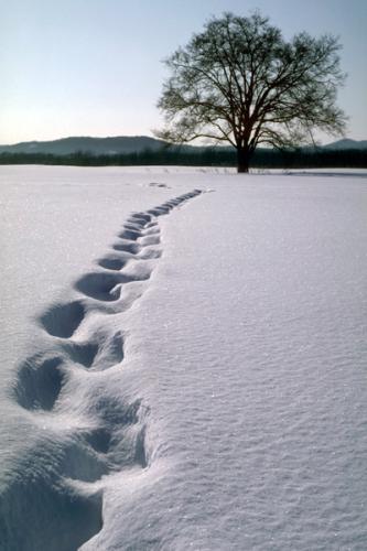 雪原の足跡.jpg