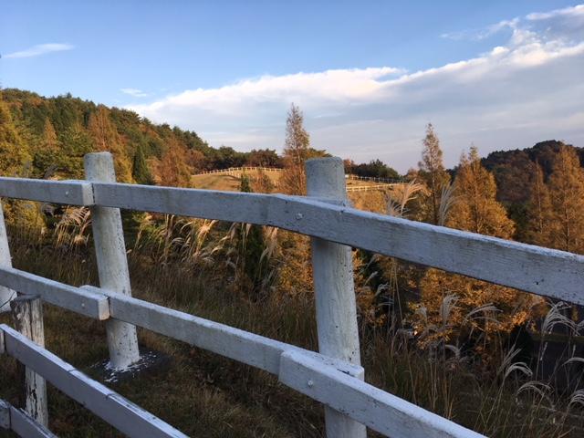 六甲山牧場1.JPG