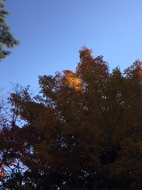 奈良紅葉1.JPG