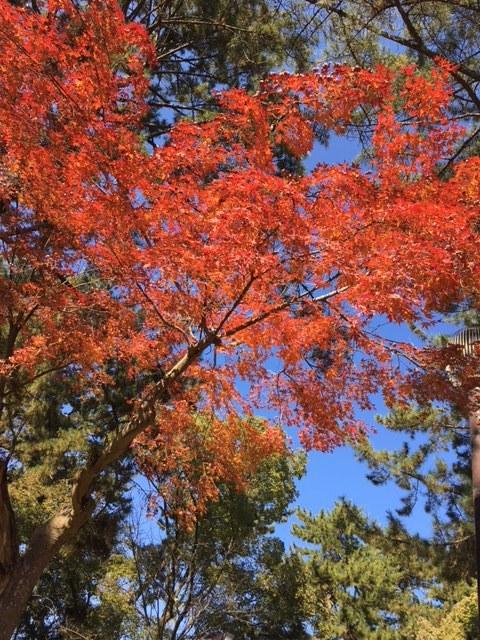 奈良紅葉2.JPG