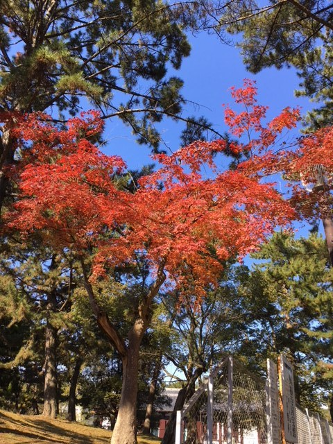 奈良紅葉3.JPG
