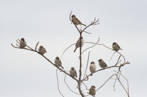 雀の木冬.jpg